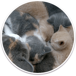 Our latest selection of Kittens